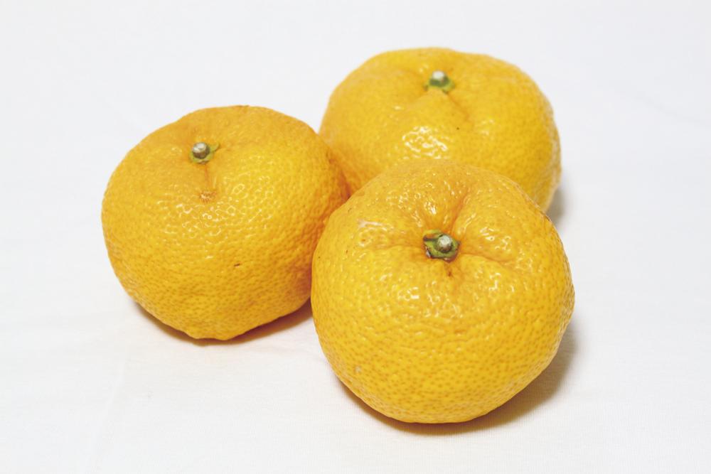 ユズ Citrus junos 常緑小低木。柑橘類の中では耐寒性が強く、病気にかかることも少ないため、無農薬栽培で育てやすい果樹。1本で実をつけます。