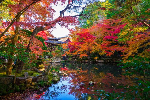 南禅寺(なんぜんじ) 水面に映る色模様も美しい天授庵の池の紅葉。左京区南禅寺福地町