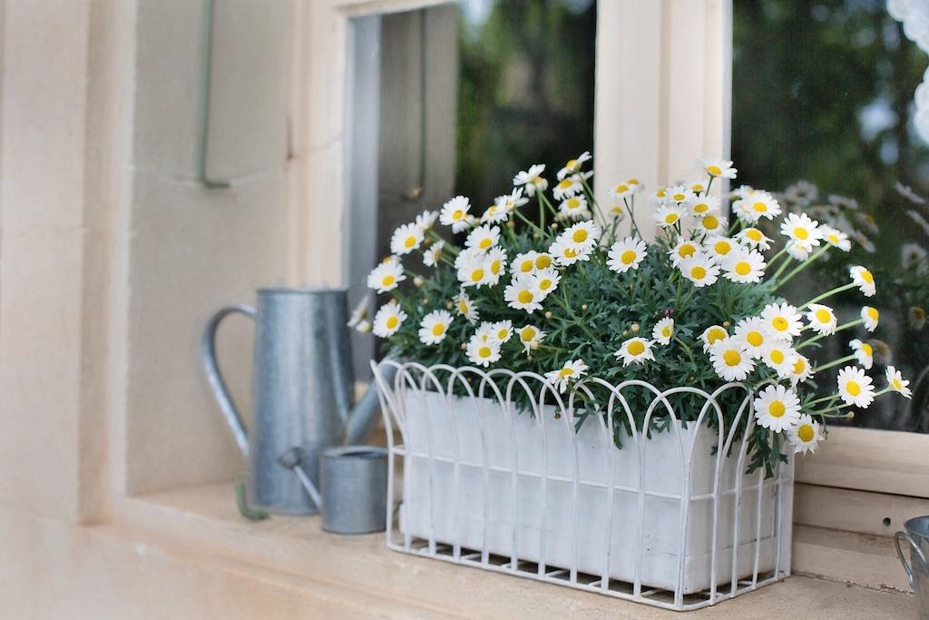 白いマーガレットのウィンドウボックス。季節ごとに花を変えて楽しみます。