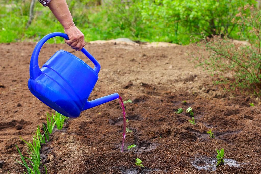 追肥の方法は液肥を利用するのもよい