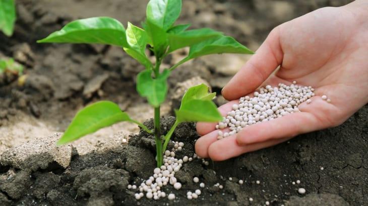肥料の施し方