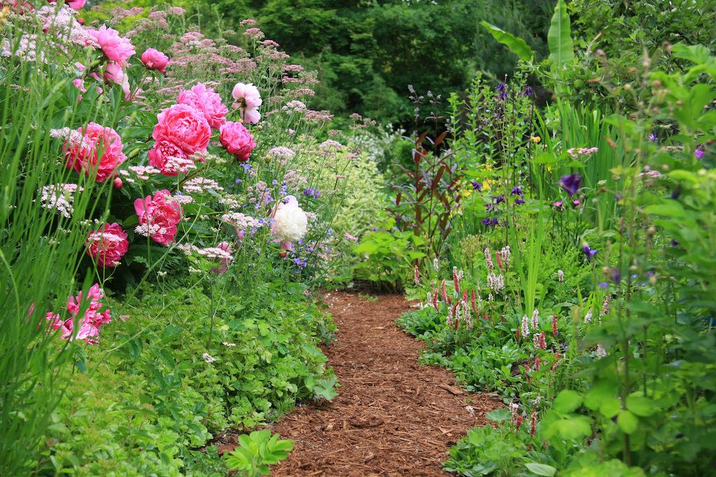花の小道で圧倒的な存在感を放つピンクのピオニー。バラにも似た堂々とした佇まいですが、トゲがない分、ピオニーのほうが扱いが楽です。
