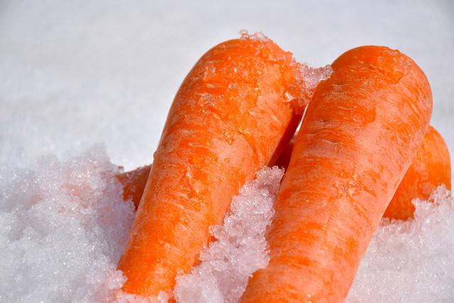 人参 「雪の下ニンジン」と呼ばれるもので、秋に収穫せず冬の間雪の下に埋められて過ごした人参です。糖度が普通の人参の2倍ともいわれる甘さ。