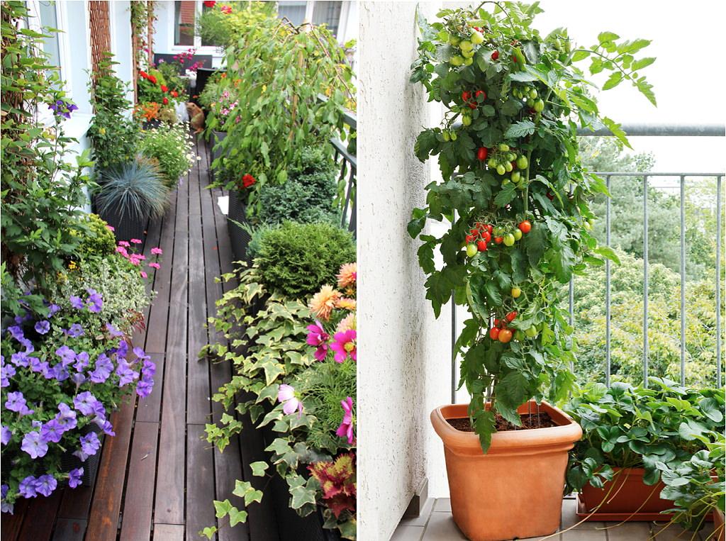 マンションのバルコニーやベランダでも、鉢植えで華やかなガーデンや家庭菜園を楽しむことができます。