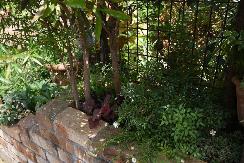 狭い庭のガーデニング