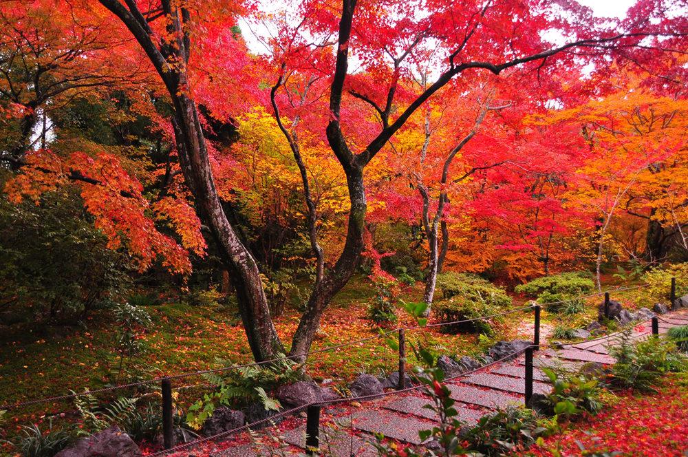宝筐院(ほうきょういん) 京都嵯峨野にある寺院。モミジやドウダンツツジが多数。右京区嵯峨釈迦堂門前南中院町9