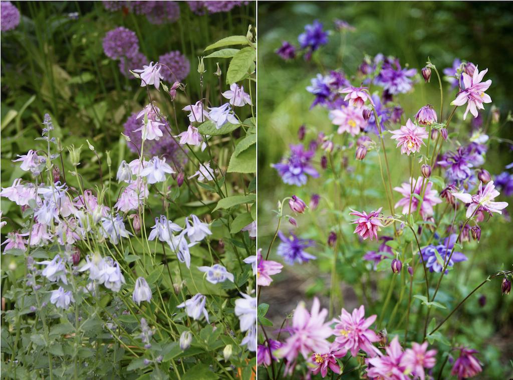 繊細な花姿は群生させると、より美しい。