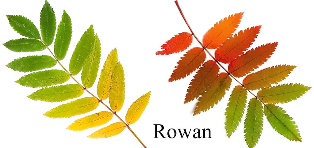 ボタニカルクラフト 秋の葉っぱ...