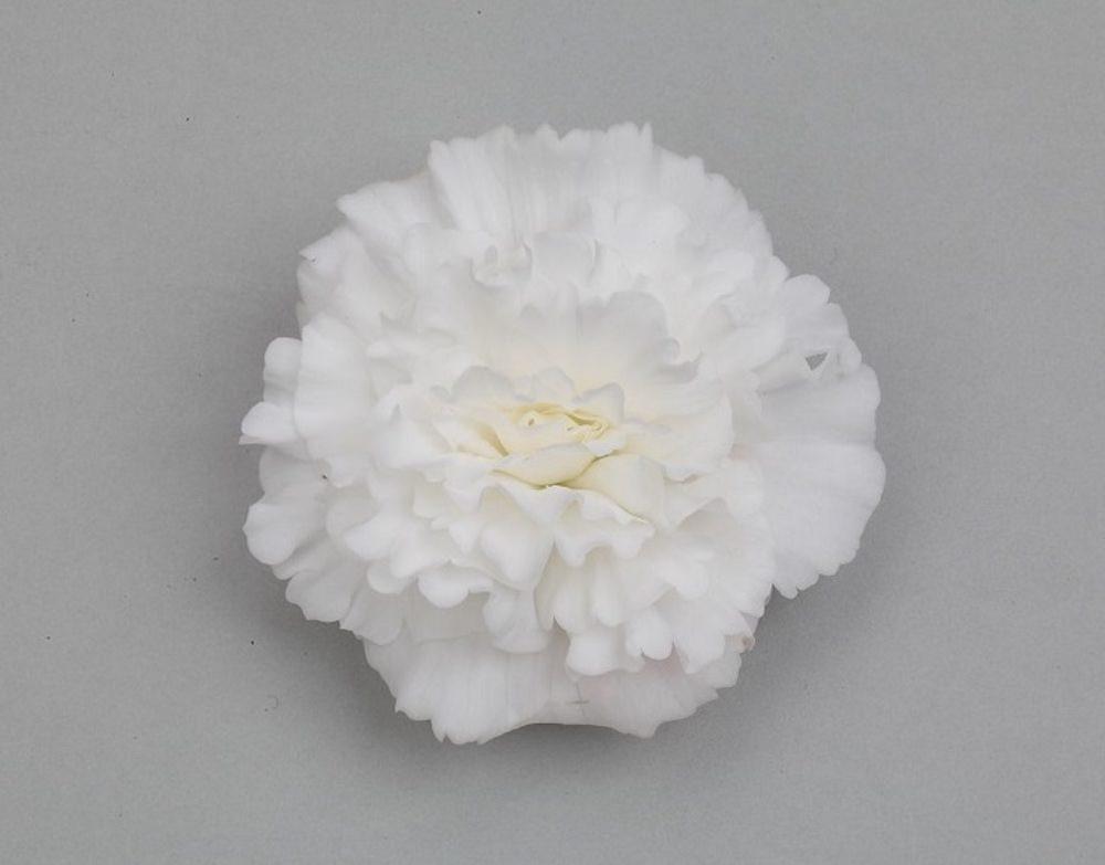 ホワイト/花つきがよく、株が横に大きく広がるホワイトは、ガーデンの演出に使いやすい品種。純白の花弁の中心にのぞく、黄色のしべも可愛らしい。