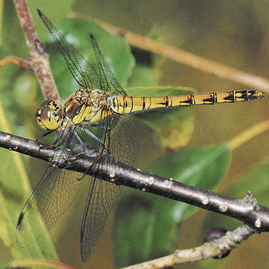 トンボやチョウなどの昆虫が集まる。