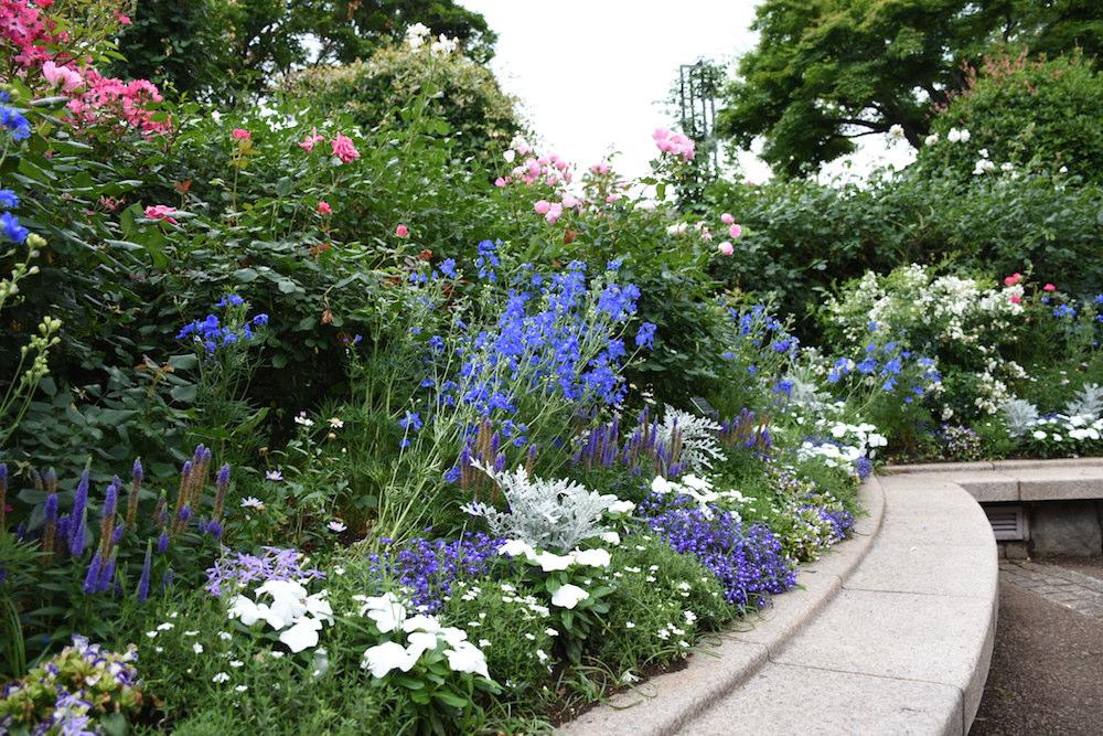 シルバーリーフと青花の花壇