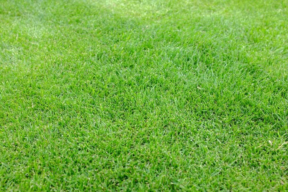 美しい芝生
