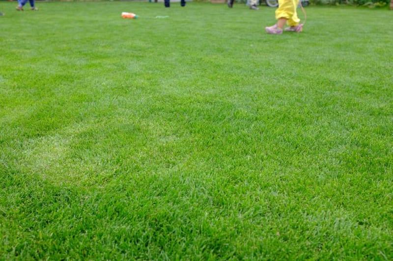 芝生の庭づくり