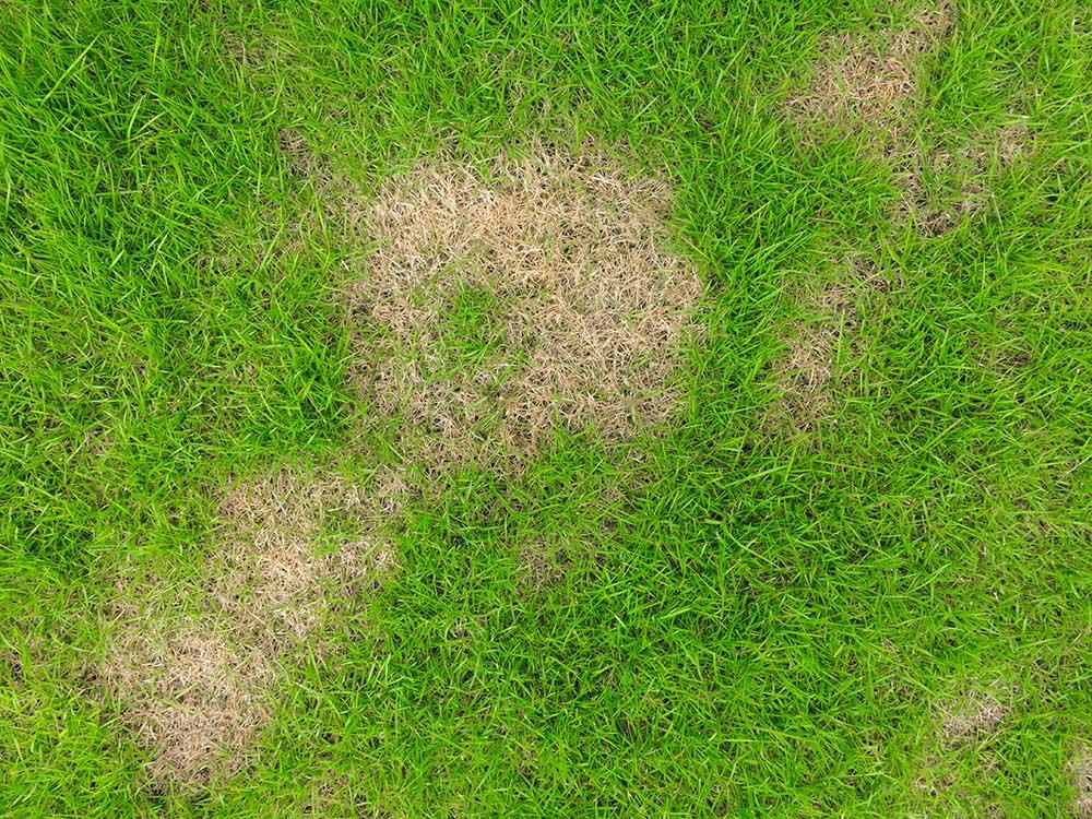 はげた芝生