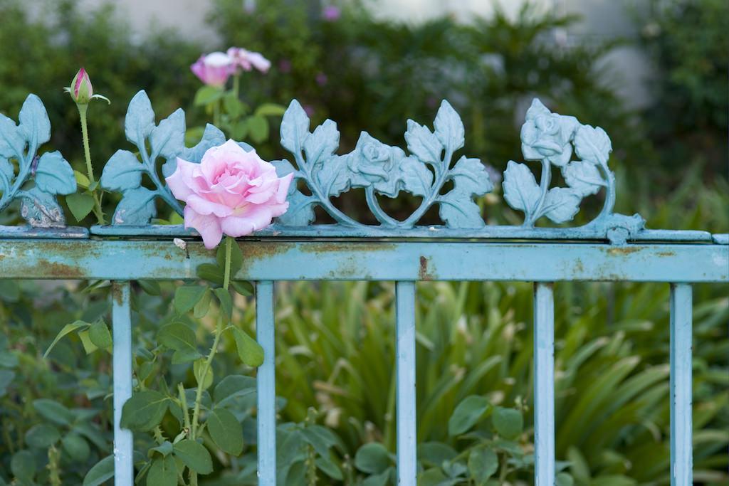 バラのモチーフがついたアンティークのアイアンフェンス。一部に取り入れても可愛いですね。