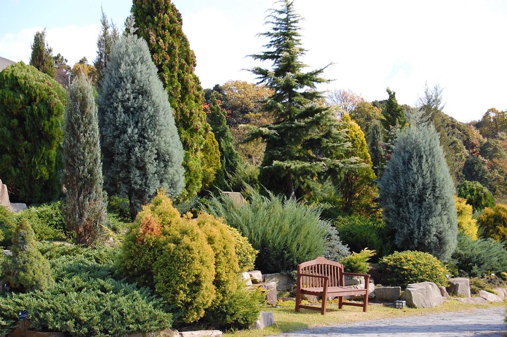樹形が美しく色彩豊かなコニファーガーデン