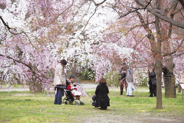 花見を楽しむ家族 (京都府立植物園)
