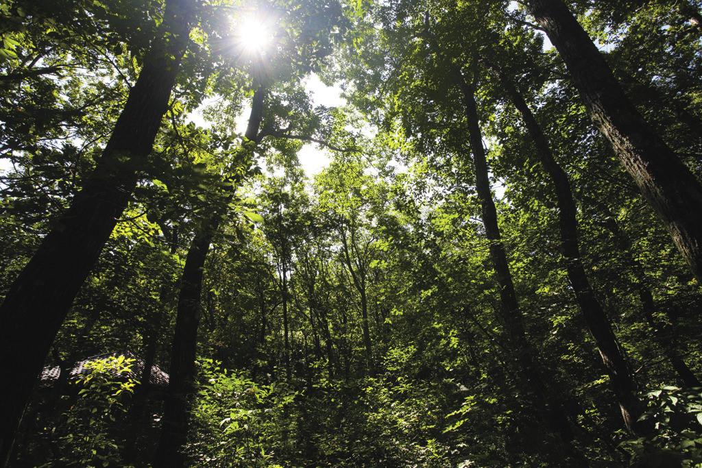健全な森では、さまざまな生き物がうまくバランスをとって共生しています。
