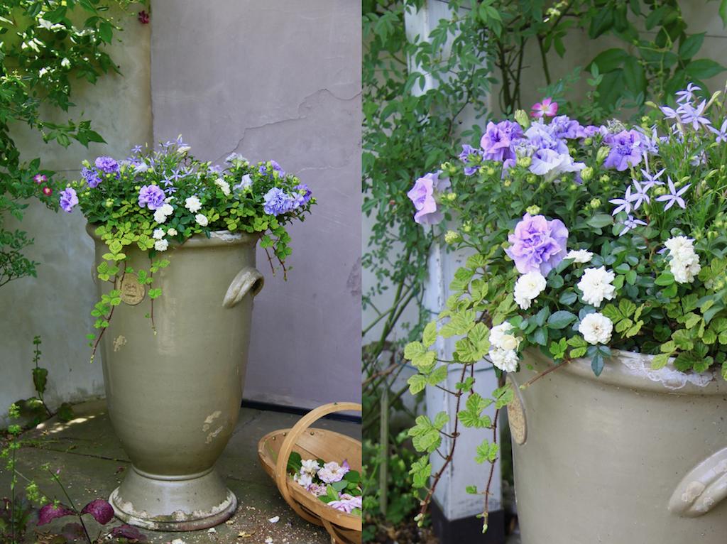 寄せ植えをつくる際は、まず置き場所をよく観察し、周囲の色や素材との調和を考えるようにすると、一鉢でも美しい風景を生み出すことができます。