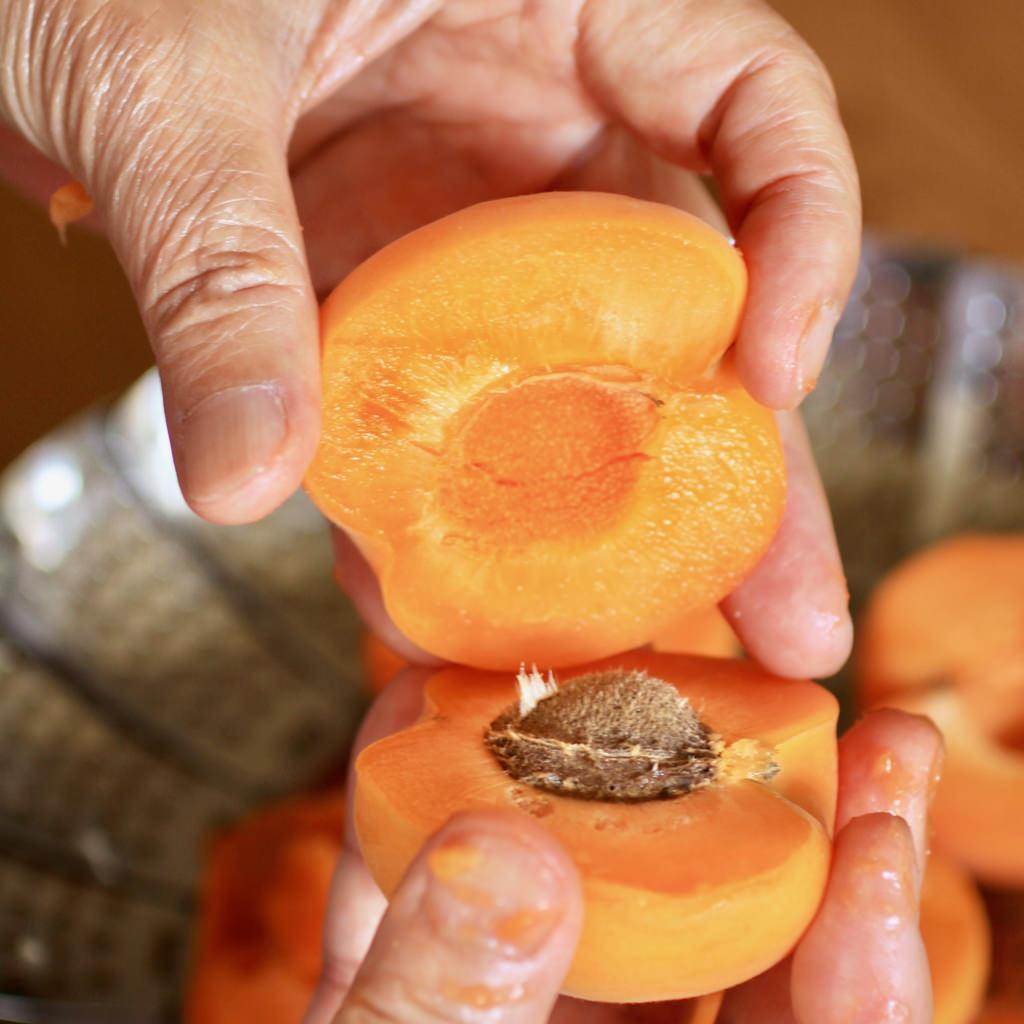 ①アンズの筋に沿って包丁をぐるりと入れ、半分に実を割ります。