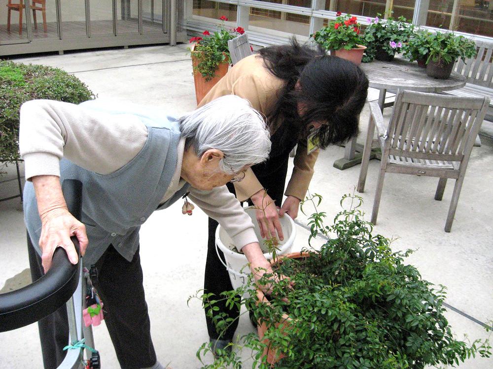 特別養護老人施設での園芸療法