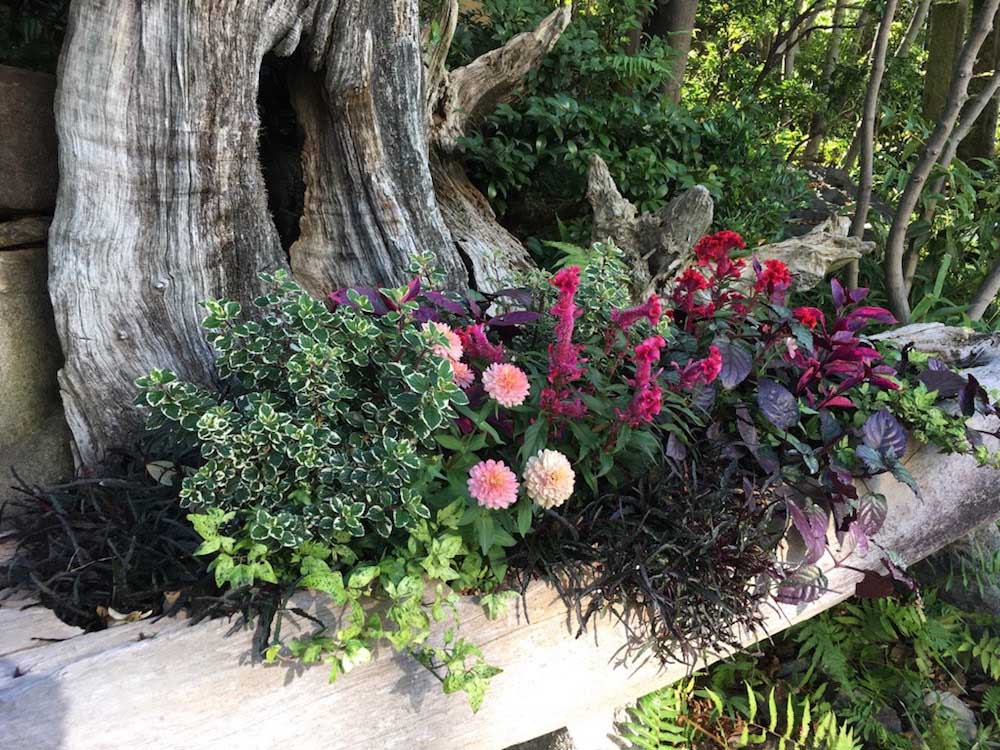 花壇で丈夫に育つ植物