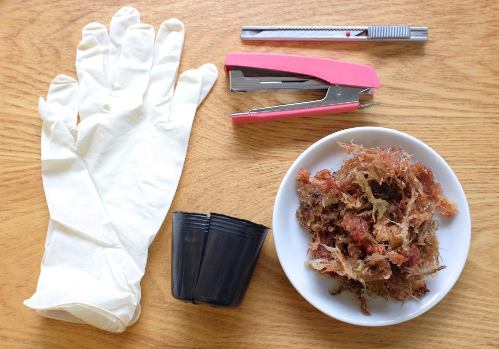 観葉植物の取り木に使う道具