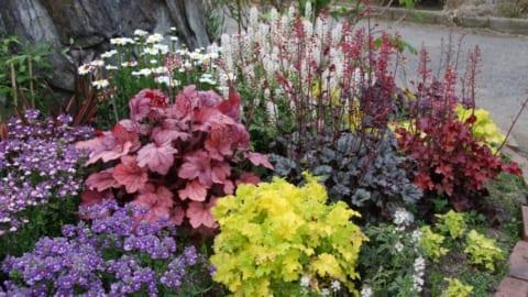 カラーリーフの花壇