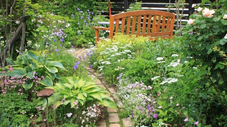 宿根草が育つ庭