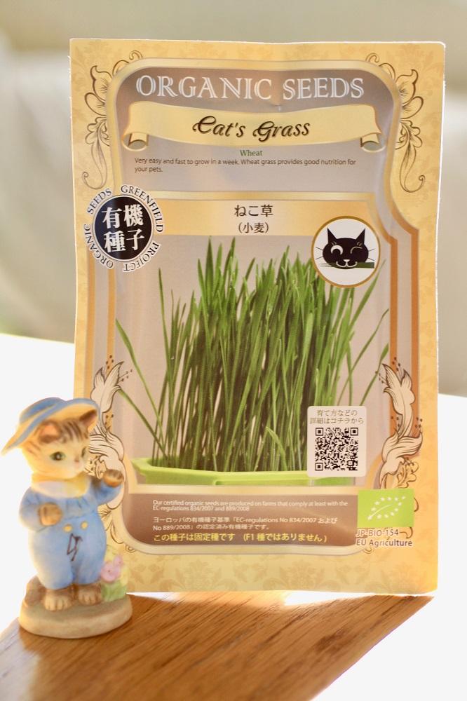 猫 草 育て 方