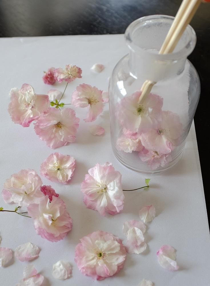 乾燥剤でドライにした桜を飾る
