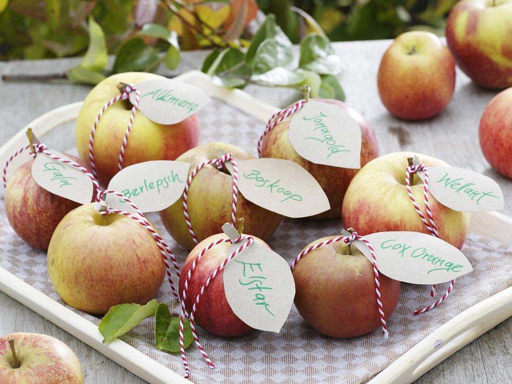 リンゴの品種バリエーション