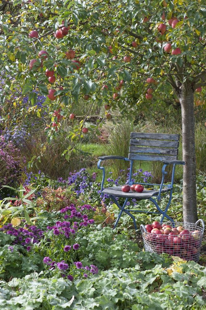 リンゴの木と実