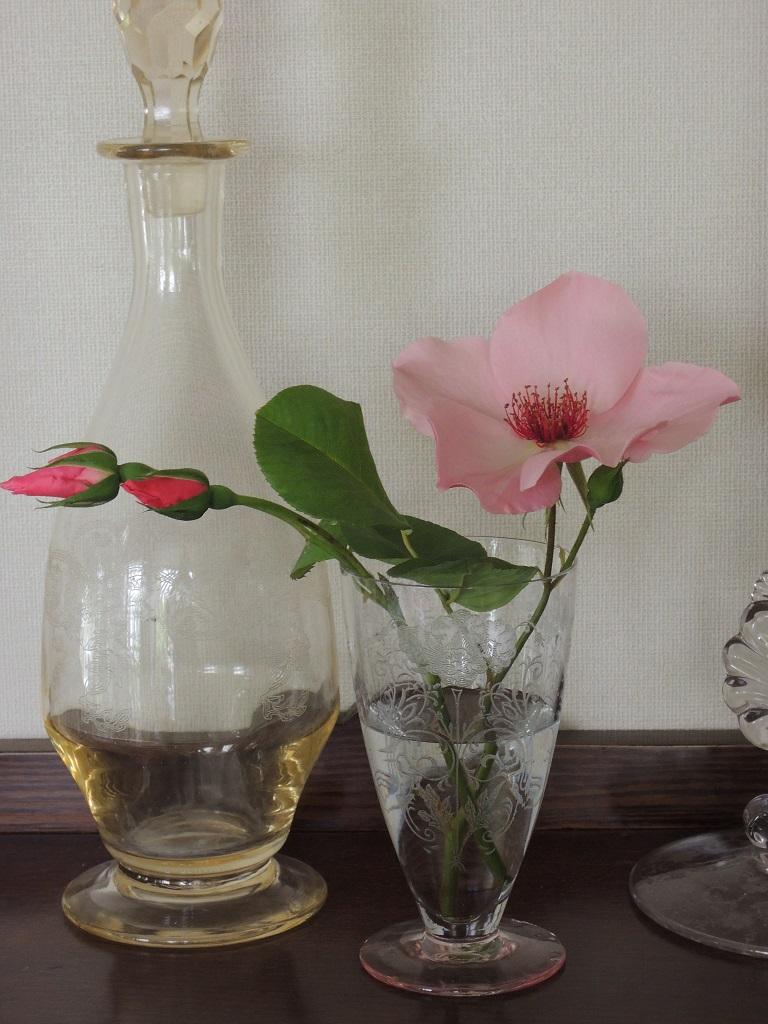 秋開花した'デンティ・ベス'。
