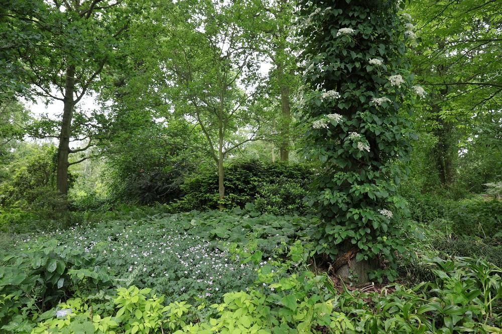 森を背景に樹木につるが絡む