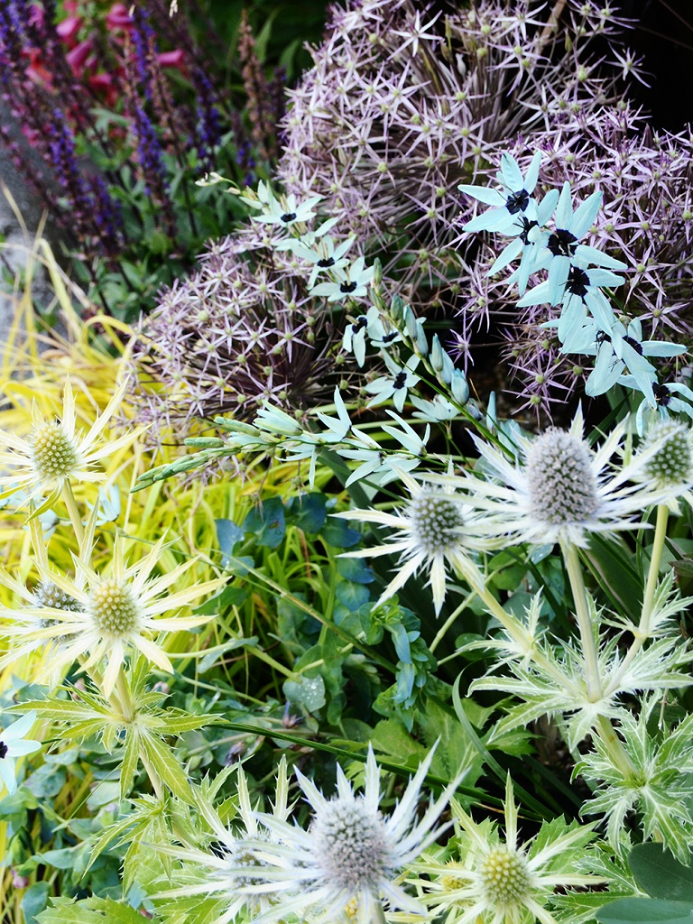 アリウムやイキシア・ヴィリディフローラの咲く花壇