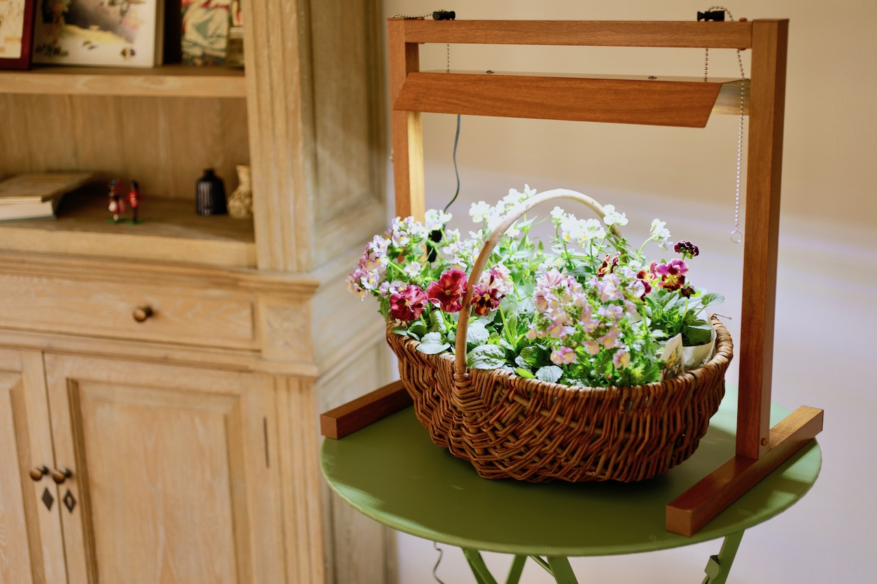 卓上グリーントラッグで寄せ植えを栽培