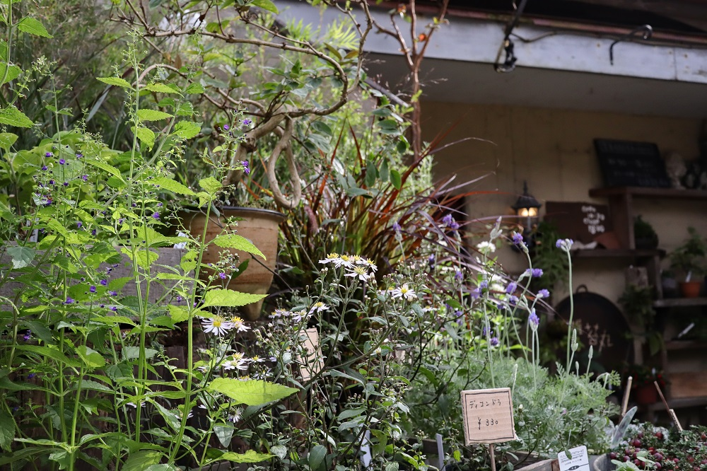 店先の草花