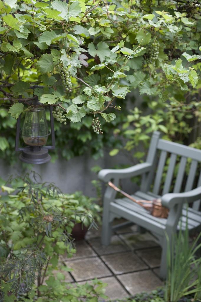 一才ヤマブドウとベンチ