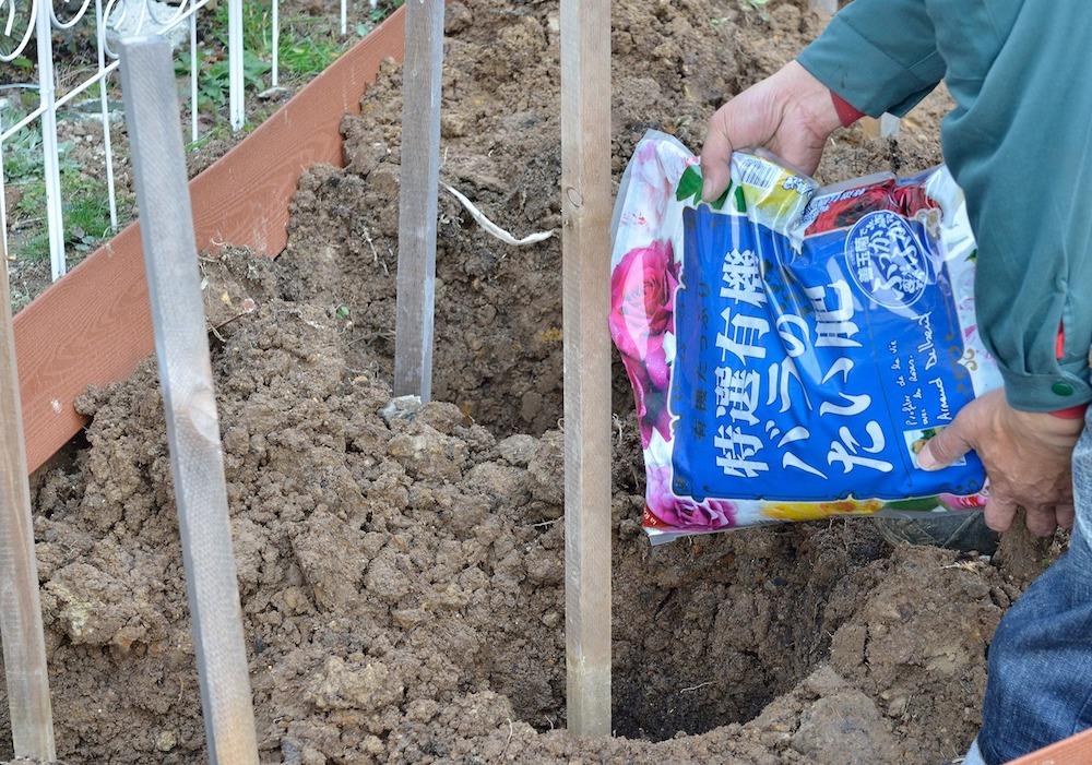初心者さん必見!バラの花壇の作り方-肥料を入れる-