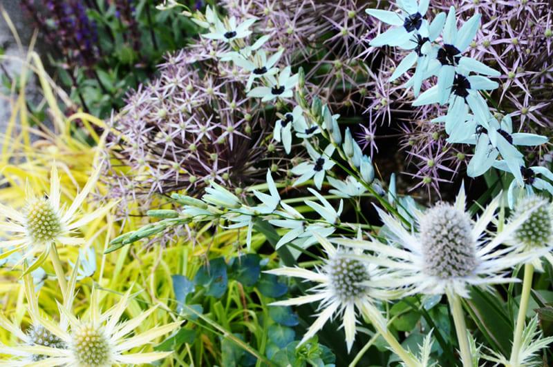 宿根草植栽に織り交ぜて楽しみたい秋植え球根