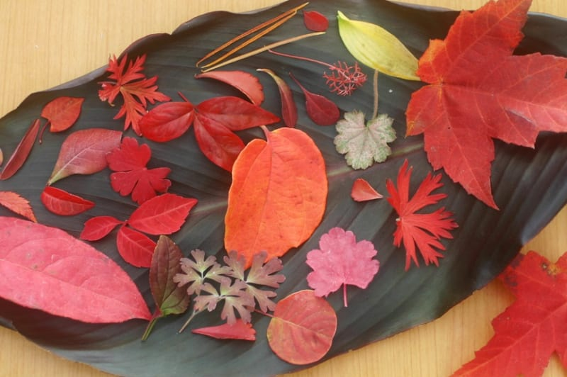 さまざまな形の紅葉した葉
