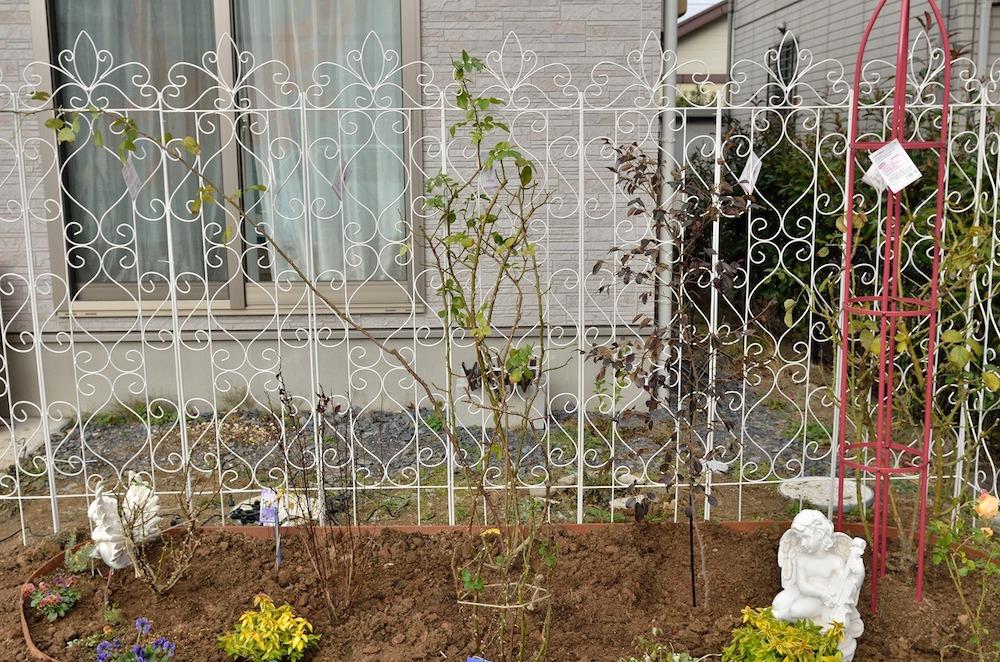 初心者さん必見!バラの花壇の作り方-低木を植える-