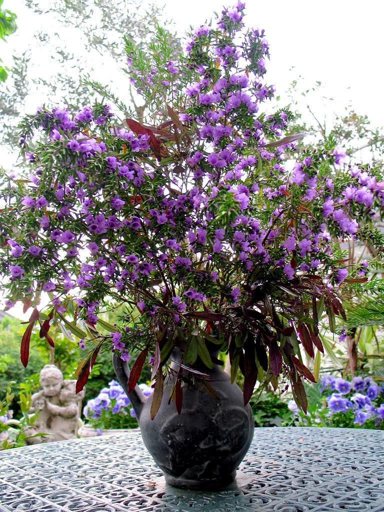 ミントブッシュの切り花