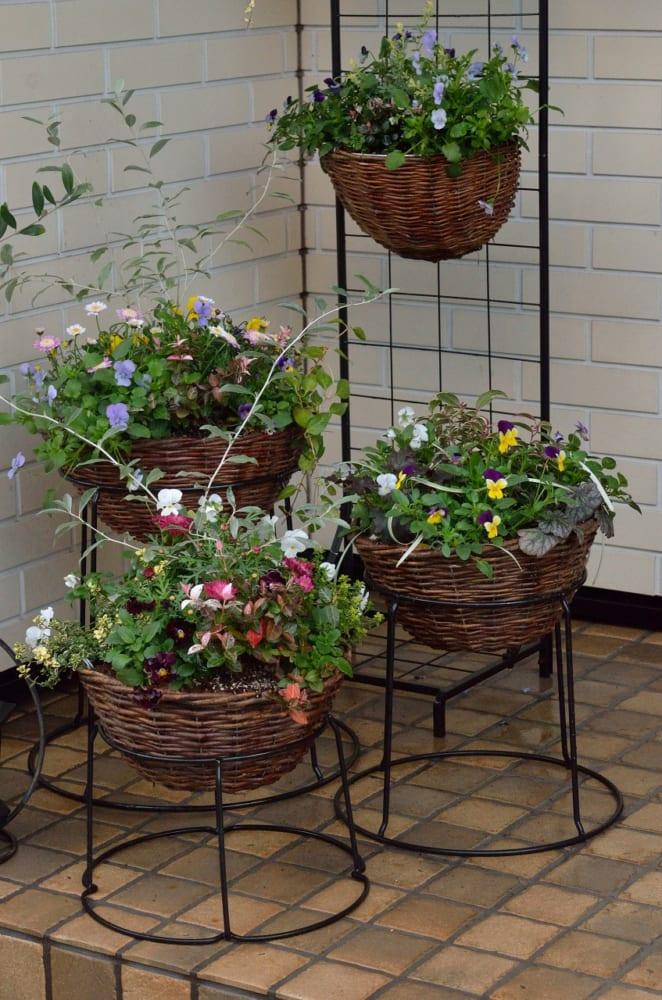 マーガレットの寄せ植えを飾った玄関先