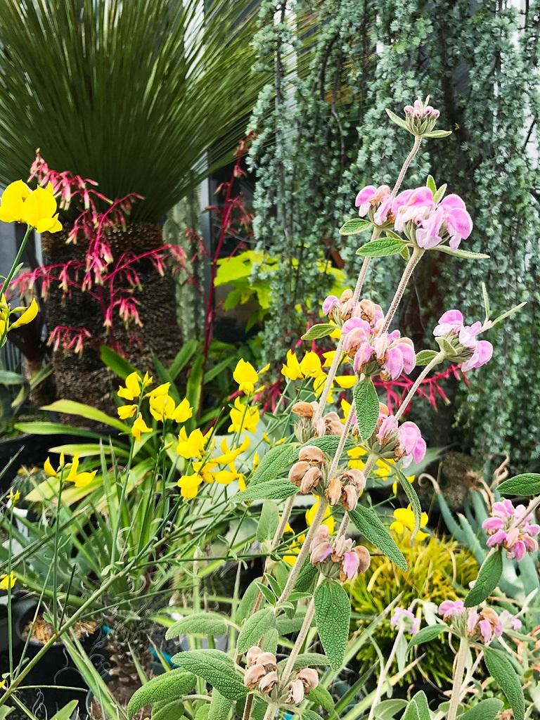 ベスコルネリアと花