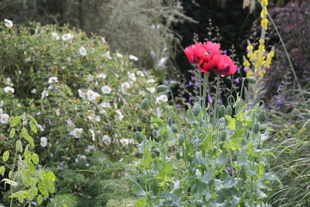 イギリスのベス・チャトー・ガーデン内グラベル・ガーデンの植栽