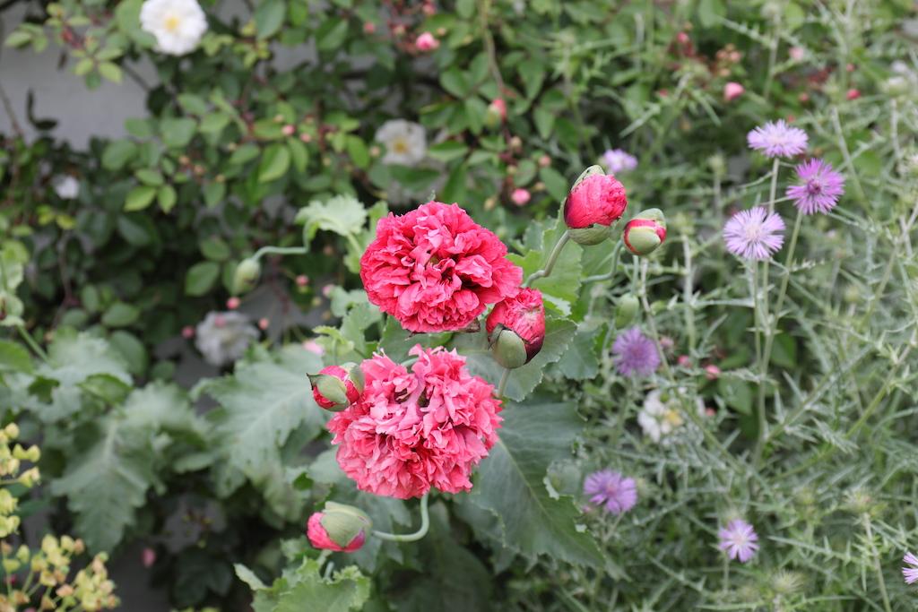 イギリスのベス・チャトー・ガーデン内スクリー・ガーデン