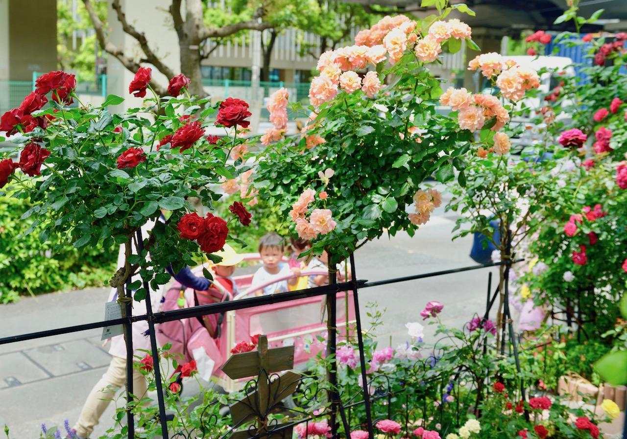 通りに面した庭のバラ