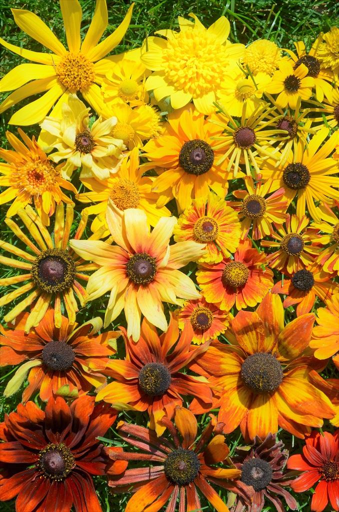 花色グラデーション